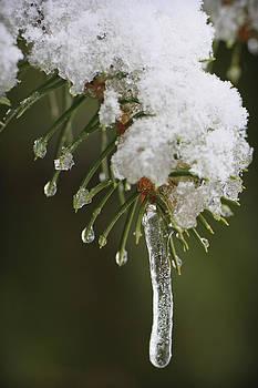 Adam Romanowicz - The Last Snow