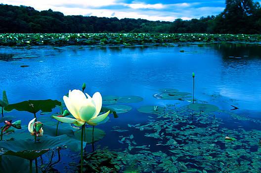 Randall Branham - The Light In The lillie