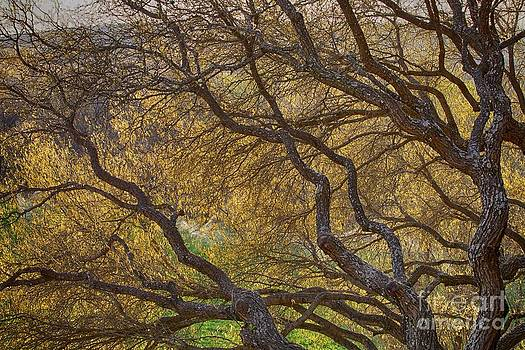 The Light Through The Branches by Nicola Fiscarelli