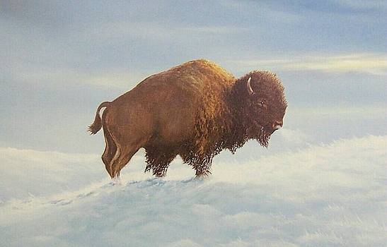The lone Buffalo by Don Griffiths
