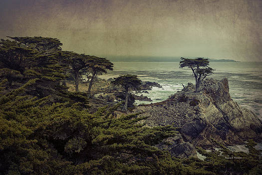 Angela A Stanton - The Lone Cypress