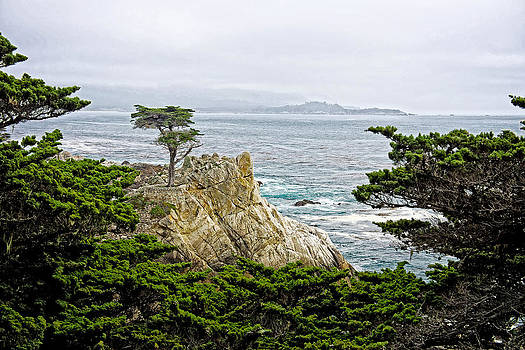 The Lone Cypress by Bill Boehm