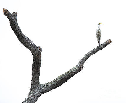 The Lone Egret by Paul Frederiksen