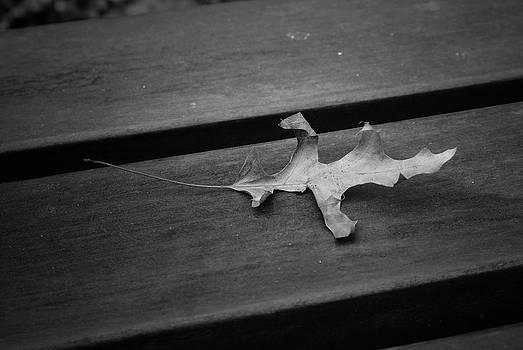 The lonely leaf by Fabian Cardon