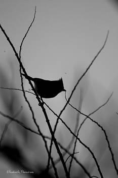 The Lookout by Elizabeth Parenteau