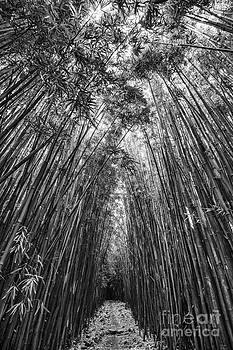 Jamie Pham - The magical and mysterious bamboo forest of Maui.