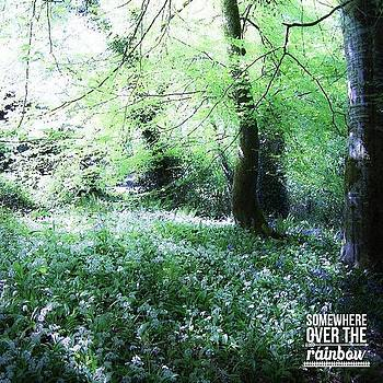 The Magical Forest Around Blarney by Teresa Mucha