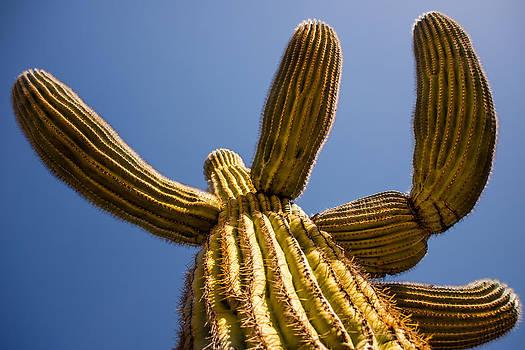 onyonet  photo studios - The Majesty of Saguaro Cactus