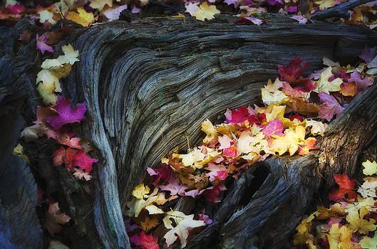 Saija  Lehtonen - The Many Colors of Fall