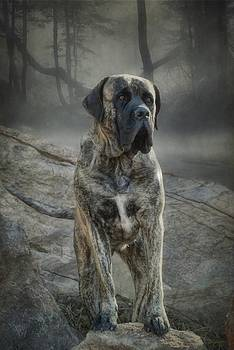 The Mastiff by Fran J Scott