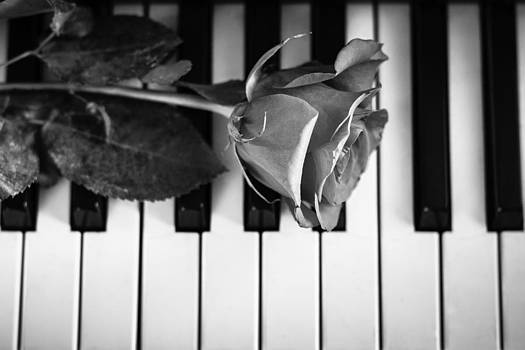 The Melody Of A Blossom by Edward Khutoretskiy
