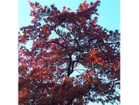 The Mighty Oak by Lila Mattison