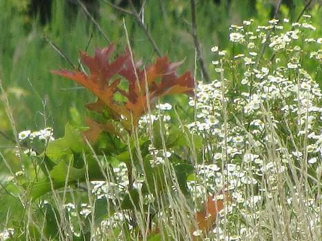 The Mighty Tiny Oak Amidst White Flowers by Debbie Nester