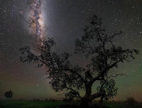 The Milky Way Above A Tree In Australia by Babak Tafreshi
