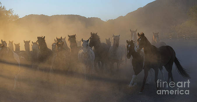 Sandra Bronstein - The Morning Run