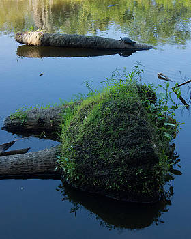 The Myakka River in Myakka River State Park 3 by John Myers