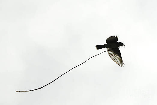 Andrea Kollo - The Nesting Instinct