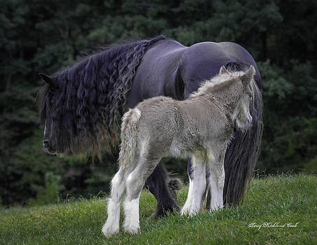 Terry Kirkland Cook - The New Silver Foal