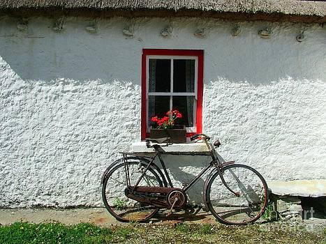 Joe Cashin - The old bicycle