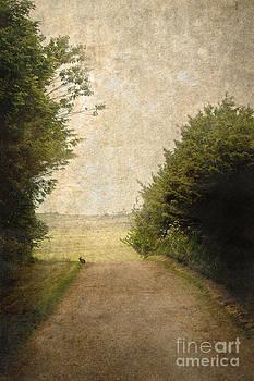 Liz  Alderdice - The Open Road