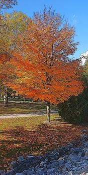 The Orange Tree by Bob Northway