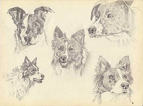 The Pack by Amelie Vandenberghe