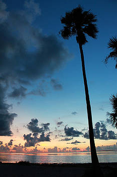 The Palm Majestic Sunset Beach Tarpon Springs Florida by Robin Lewis