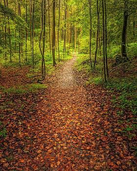 The Path by Maciej Markiewicz
