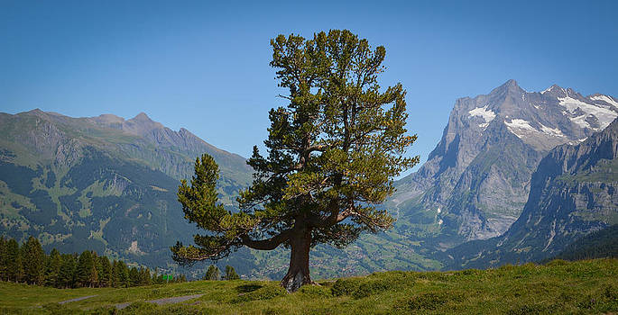 The proud tree by Stefan Hoareau
