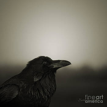 David Gordon - The Raven