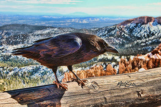 The Raven by Marti Green