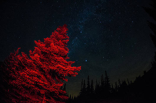 The Red Tree on a Starry Night by Brian Xavier