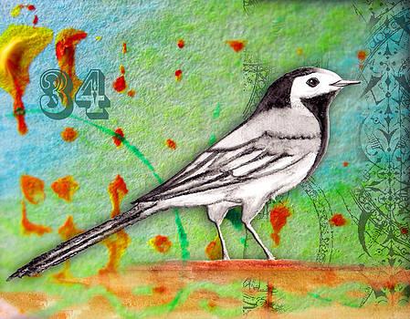 The return of Motacilla alba by Jana Bodin