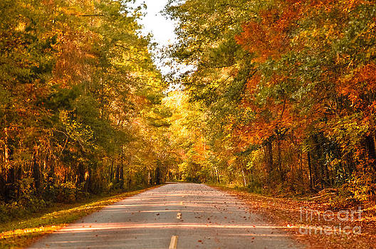 The Road to Fall by Reflections by Brynne Photography
