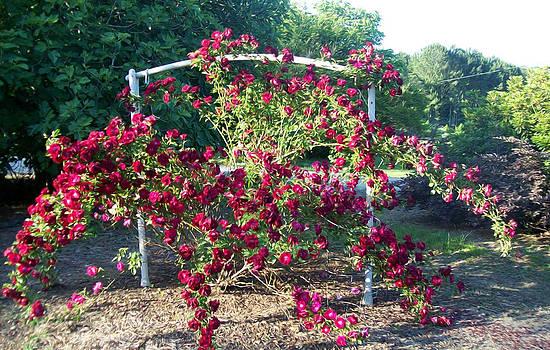 The Rose Bush by Gabriel Jeane