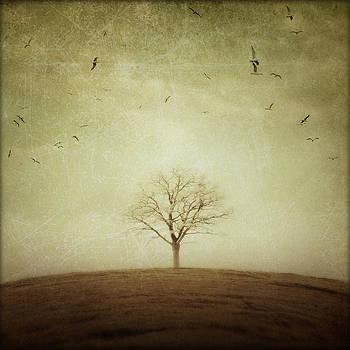 The Round Earth by Irene Suchocki