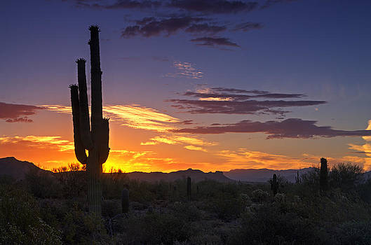 Saija  Lehtonen - The Saguaro Sunrise