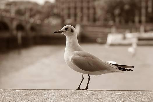 Stefan Kuhn - The Seagull Sepia