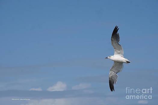 Tannis  Baldwin - The Seagull