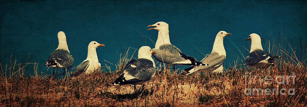 Angela Doelling AD DESIGN Photo and PhotoArt - The Seagulls