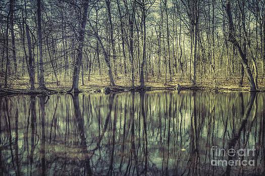 Evelina Kremsdorf - The Sentient Forest