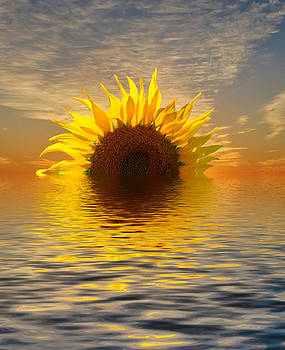 The Setting Sun-Flower 2 by Geraldine Alexander