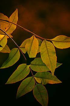 Saija  Lehtonen - The Simplicity of Autumn