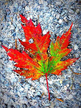 The Spirit of Autumn by The Creative Minds Art and Photography
