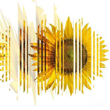 Liane Wright - The Spirit Of The Sunflower