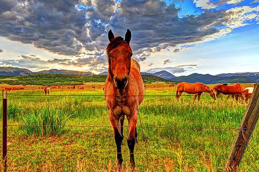 The Stallion Stares by Scott Mahon