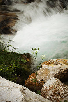 LHJB Photography - The Stream