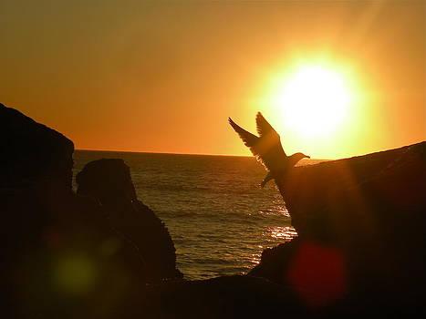 The Sun Dance by Elizabeth Thankful Shannon
