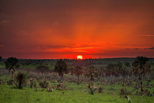 The Sun Rises Over The Horizon by Ronan Donovan