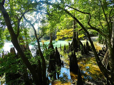 The Swamp by the Springs by Julie Dant